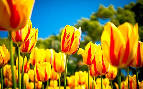 В этот волшебный весенний день, поздравляем всех женщин с праздником 8 Марта!